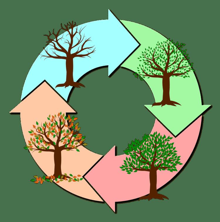 7. Die Säge schärfen – Prinzipien der ausgewogenen Selbst-Erneuerung